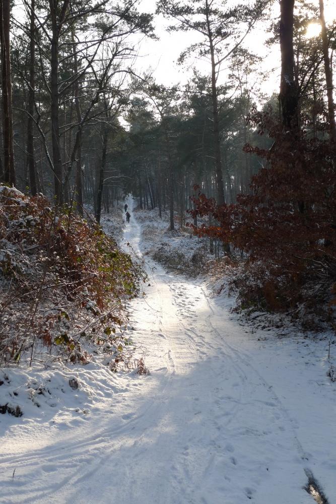 Mountainbike tochten in het Reichswald